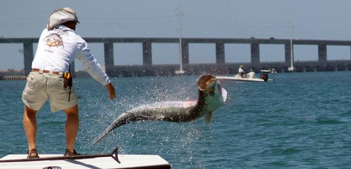 Tampa Bay fishing: Tarpon jumping out of he water