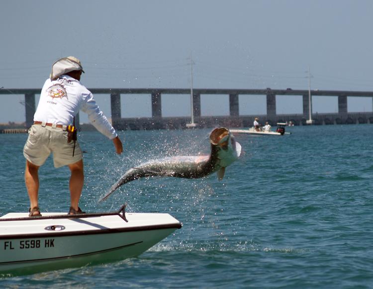 Tarpon jumping near boat