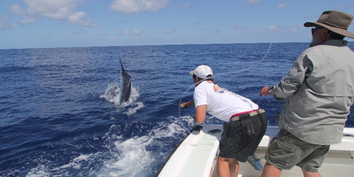 """Marlin Fishing in Cairns aboard """"Shikari"""""""