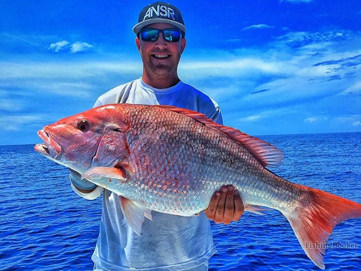 Red Snapper Season 2019: All You Need to Know