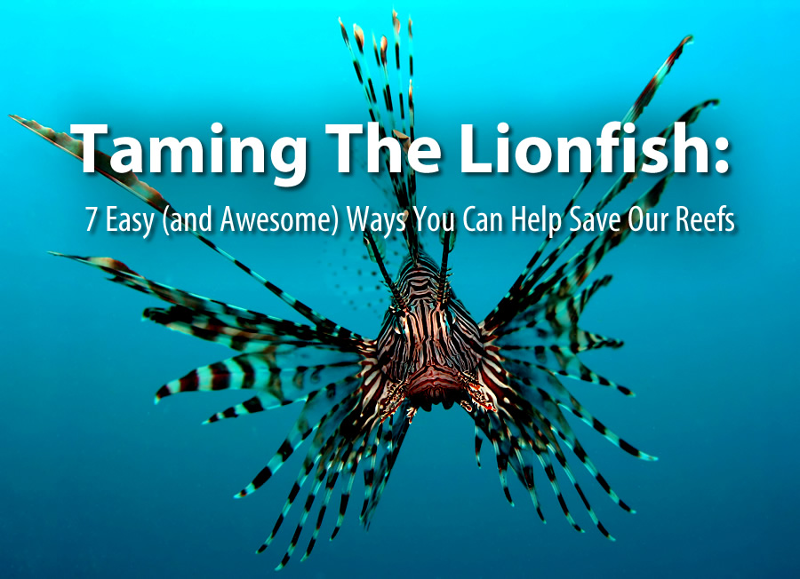 taming-the-lionfish