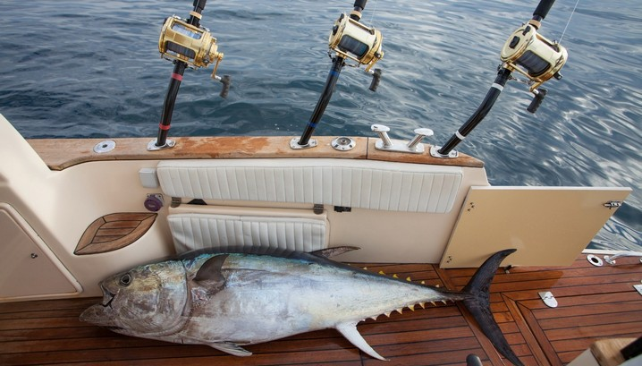 what to pack for a charter fishing trip: a yellowfin tuna