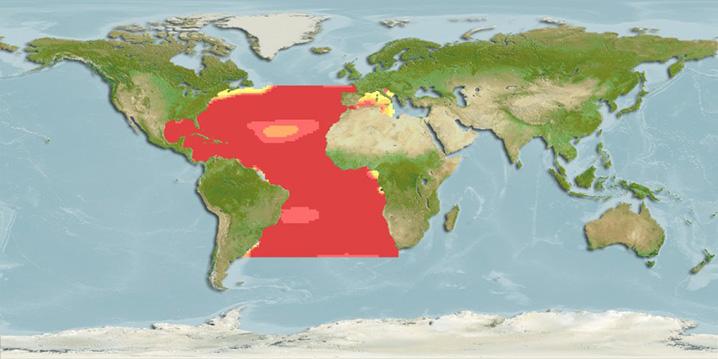 White Marlin habitat heatmap