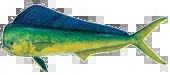 Miami Dolphin Fishing