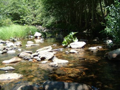 Lower water on the Tuolumne River.