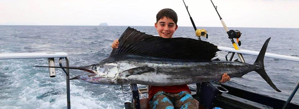 Another sailfish