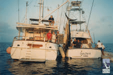 Duyfken with her mother ship weighing in a 1000lb + Marlin (picture Australian Fishing Museum)