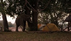 Elephants literally walked through our campsite