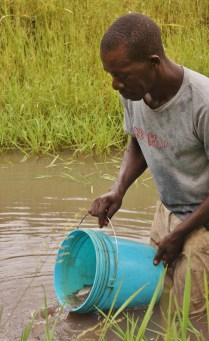 Sebastian transferring fish into a production pond to prepare for a harvest next month