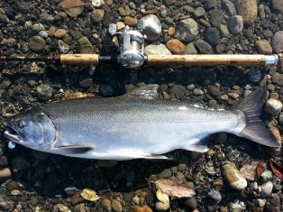 salmon fishing tips, salmon fish
