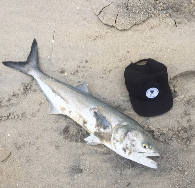 Fluke blues in the surf sea bass on wrecks lbi nj for Lbi surf fishing report
