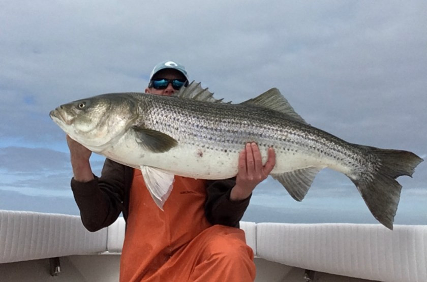 If you want to catch big striped bass, give Captain Mike Greene a call today 17186446087