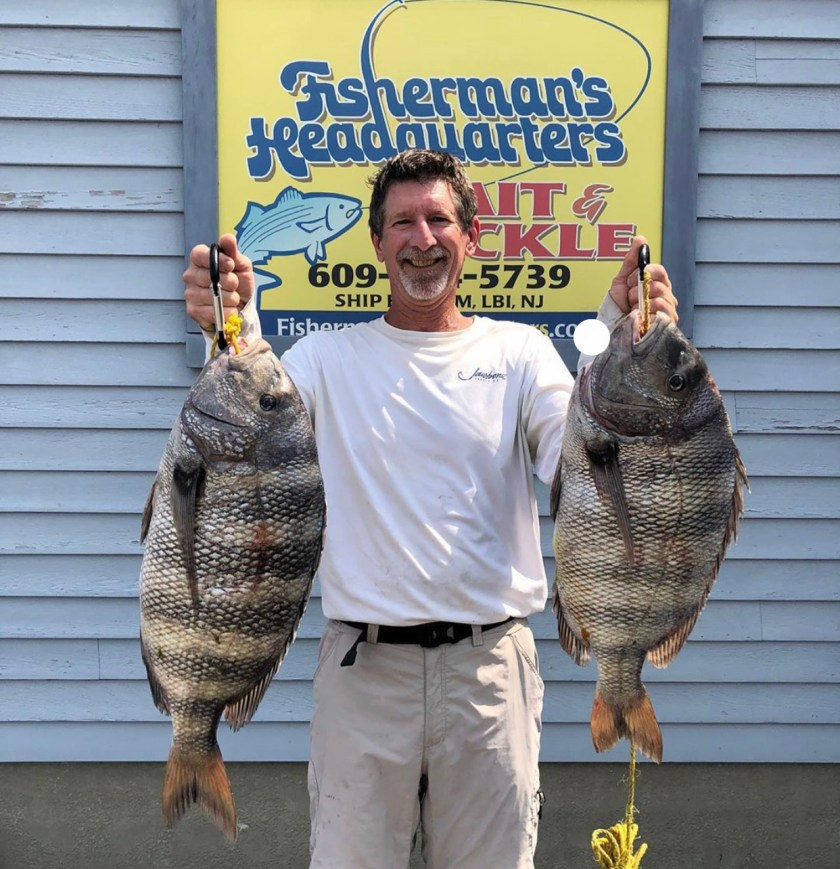 Jeff Crabtree caught this pair of big sheepshead up at Barnegat Inlet.
