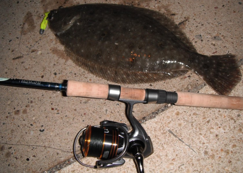 Big fluke are caught at night when fishing areas where small bait, snapper bluefish and spike weakfish prey are hanging.