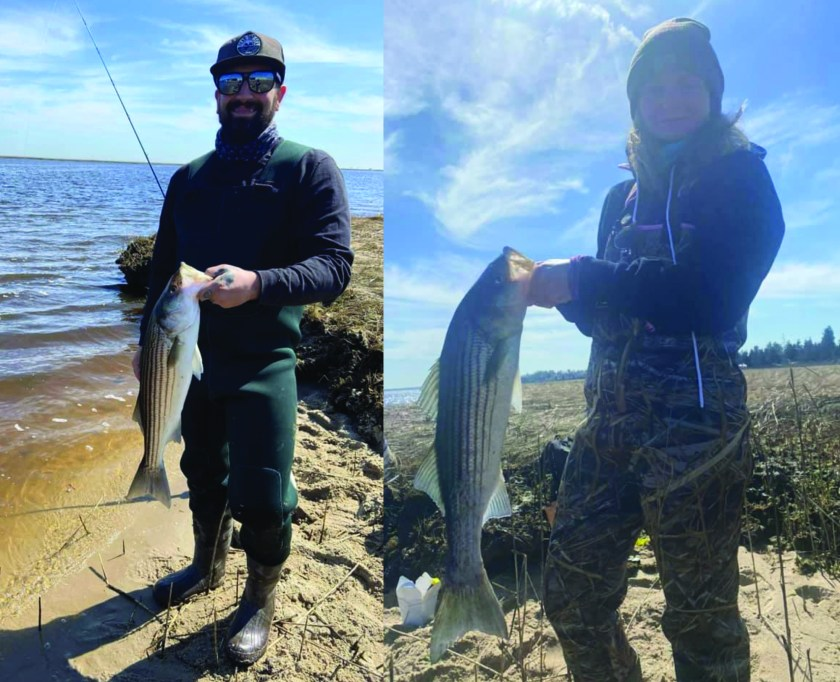 "Matthew Denora and his wife were out today and enjoyed the beautiful day fishing the sod banks. They caught a couple striped bass, biggest was 26.5""."