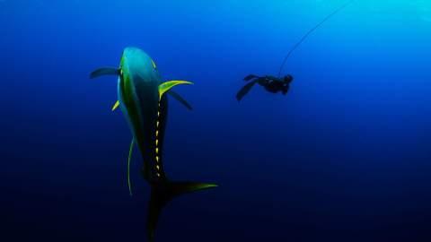 Diving in the Den of Giants