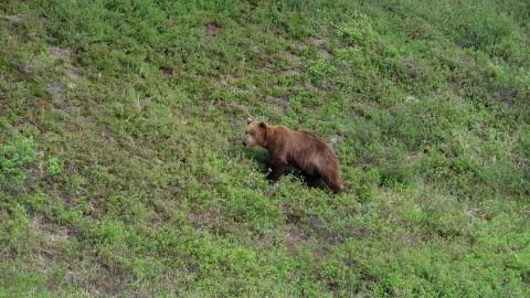 Fishing Kamchatka for King Salmon: Beautiful Fish and Hungry Bears