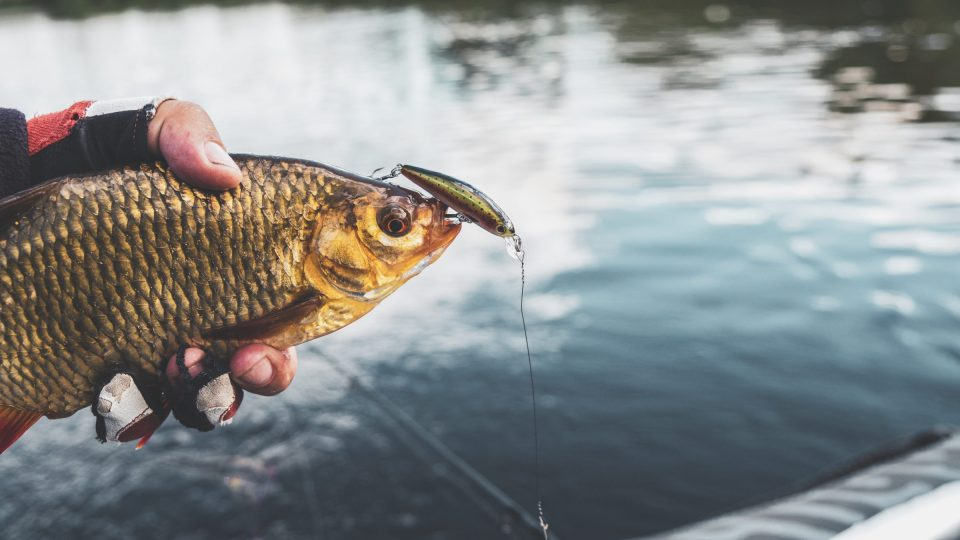 How do you solve a problem like invasive species?