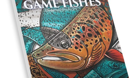 Shimano Brands Score Top Ranking in IGFA World Records Book