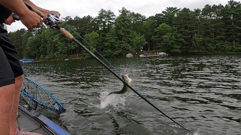 St. Croix Favorite Rods For Panfish, Walleye and Musky