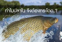 ปลาไน