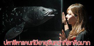 ปลาซีลาแคนท์