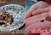เล็กที่สุดในโลก