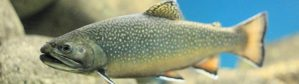 riggs-flat-lake-arizona-destination-location-map-top-10-fishing-destinations
