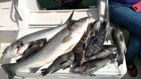charter fishing trips out of Clinton Connecticut