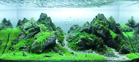 Iwagumi aquascaping