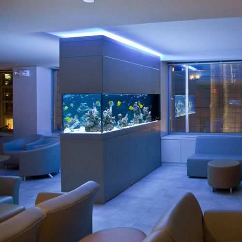 Saltwater-fish-tanks-saltwater-aquarium
