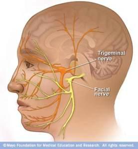 https://12cranialnerves.wordpress.com/cranial-nerve-7-facial-nerve/