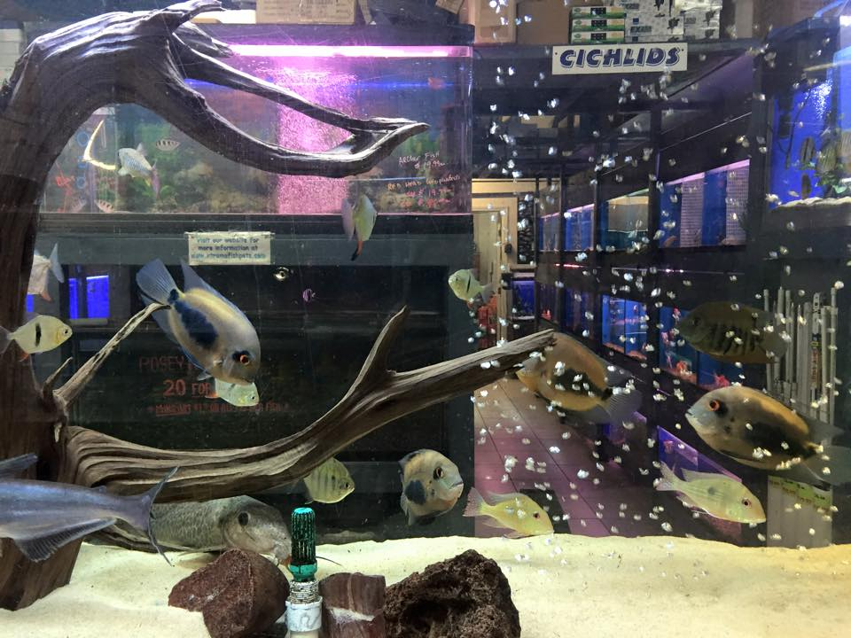 Xtreme Fish And Pets Various Kinds Of Pet