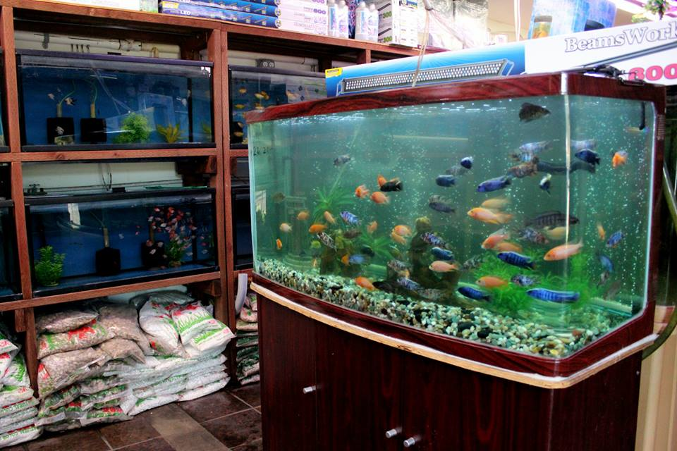 Wet Fish Shop Near Me