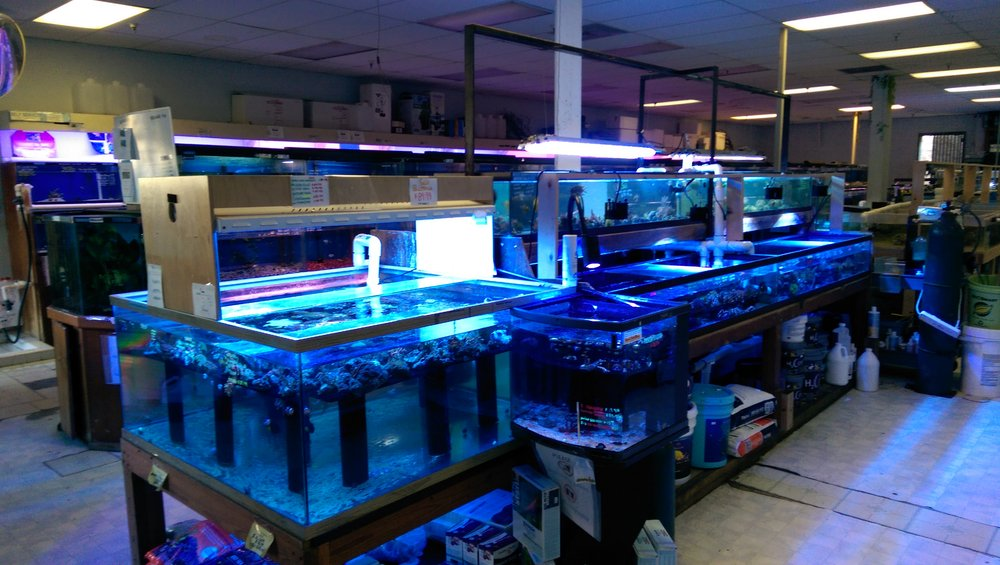 Aquarium Supplies Near Me