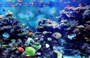 Best 10 and 12 Gallon Fish Tanks