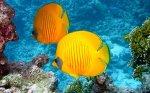 best 5 gallon fish tanks