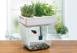 back to the roots water garden fish tank m