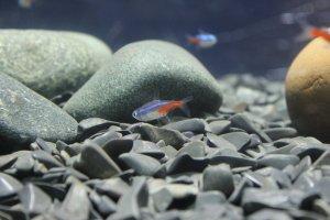 Best 2.5 Gallon Fish Tanks