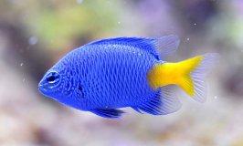 Best 20 Gallon Fish Tanks