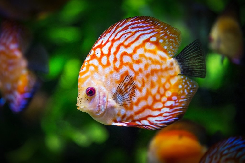 best self cleaning fish tanks