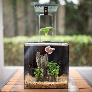 ecoqubec aquarium m