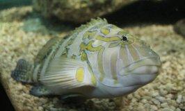 Best 45 Gallon Fish Tanks