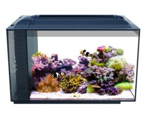 fluval evo aquarium all in one kit 13.5 gallons