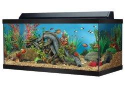 top fin 40 gallon hooded aquarium