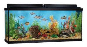 top fin aquarium starter kit 55 gallon