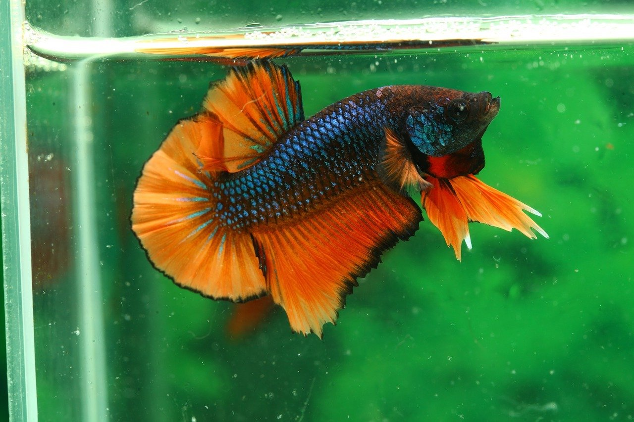 Best Betta Water Conditioner - 2018 Buyer\'s Guide and Reviews