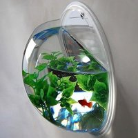 Wall Mounted Fish Bowl Bubble for Goldfish & Beta or ...