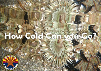 How Cold Can a Reef Tank Go?