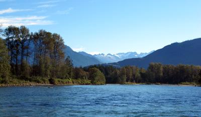 Skagit River  Fish Whatcom